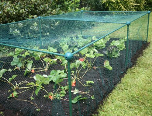 Fruit & Vegetable Butterfly Netting Cage