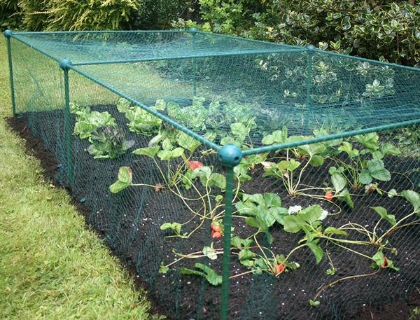 Garden Cat Protection Netting