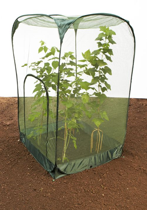 Tall Fruit Pop-up Netting Cages