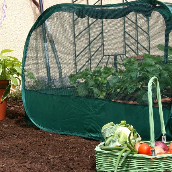 Fruit Cages, Tunnels & Plant Protection