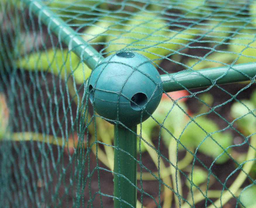 Anti Bird Netting 20mm 4m widex50m Fruit Veg Garden Nets