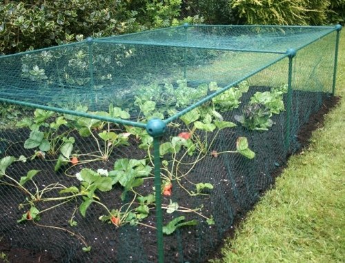 Fruit & Vegetable Protection Cage | Anti-Bird Netting | 1m x 1m Frame