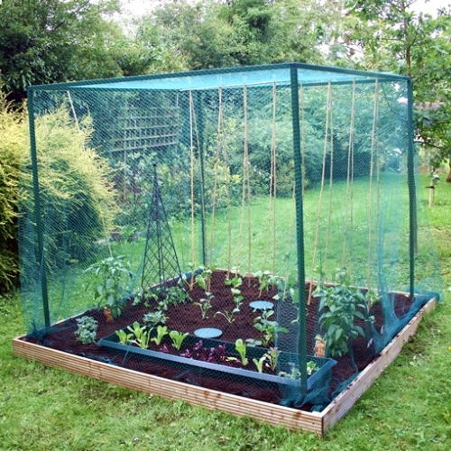 Walk In Fruit Cage 6mx2m Vegetable Amp Plant Bird Protection