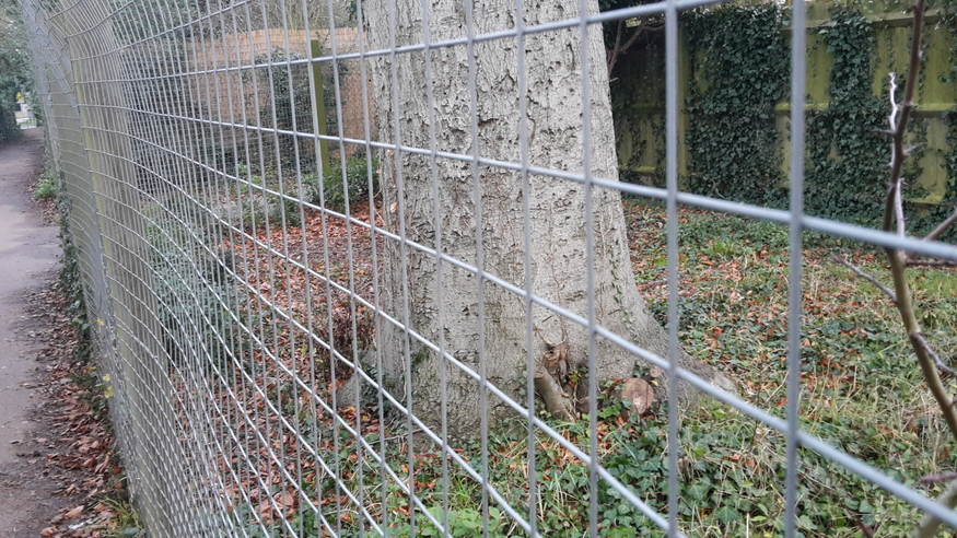 1 2mx25m Galvanised Weld Wire Steel Mesh Fencing 50mm