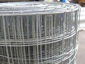 Heavy Duty Weld Mesh 1.5m(5ft) x 12.5m ~ 50mm holes ~ 12 swg/2.5mm