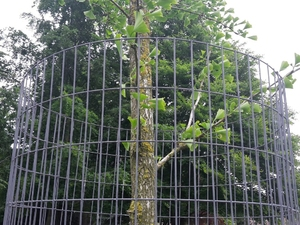 "Weld Mesh Tree Guards - 1.8m x 600mm Dia. (3"" x 1"" Aperture)"